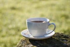 Kopp te i morgon Arkivbild