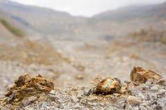 Koppar-, guld- och silvervillebråd Arkivfoton