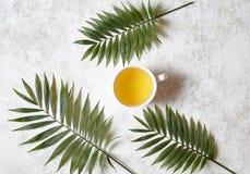 Koppen av grön naturaltea på en vit konkret bakgrund med gömma i handflatan filialer Vila i varmt tropiskt landsbegrepp plant fotografering för bildbyråer