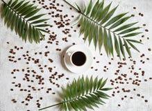 Koppen av svart espresso på en vit idérik konkret bakgrund med kaffebönor och gömma i handflatan filialer Vila i varmt tropiskt fotografering för bildbyråer