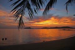 Koppla av den härliga solnedgången för den härliga semesterkokospalmen på koh Mak Island Trad Thailand arkivbilder