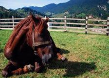 koppla av för häst royaltyfria bilder