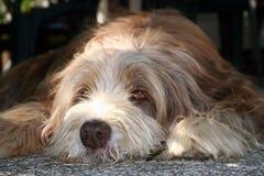 koppla av för hund royaltyfri fotografi