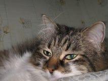 koppla av för katt Arkivfoto