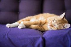 Koppla av Ginger Cat Lays Down på soffan royaltyfri fotografi
