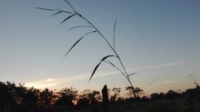 Koppla av himmel Fotografering för Bildbyråer