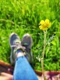 Koppla av i trädgården med gula vildblommor royaltyfria bilder