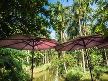 Koppla av kaffe och desertera stången bredvid kanalen gömma i handflatan in trädgården royaltyfria bilder