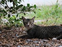 Koppla av katten på trädgård Arkivfoto