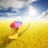 Koppla av kvinnan som rymmer det mångfärgade paraplyet i gul risfält och, fördunkla himmel Arkivfoto