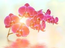 Koppla av orkidébakgrund arkivbild