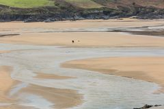 Koppla ihop att gå hunden, den Crantock stranden, Cornwall royaltyfri fotografi