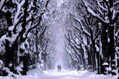 Koppla ihop att gå i parkera, vintertid Royaltyfria Foton