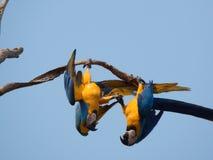 Koppla ihop av fåglar Arkivbild