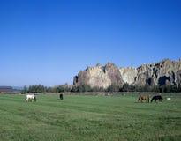 Koppla ihop av hästar som äter nära smed, vaggar, Oregon Royaltyfri Bild