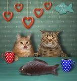 Koppla ihop av katter i ett kafé 2 royaltyfri foto