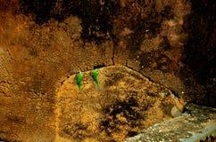 Koppla ihop av papegojor Royaltyfria Foton