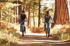 Koppla ihop berget som cyklar till och med skogen, Big Bear, Kalifornien Royaltyfri Foto