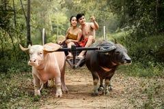 Koppla ihop det thailändska oket för buffeln för tid för bondefamiljlycka Royaltyfria Bilder