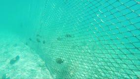 Koppla ihop för skydd av havskusten från havsfisk lager videofilmer