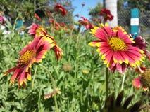Kopplar samman blommor royaltyfri bild