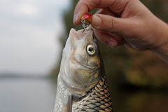 Kopvoorn in de hand van de visser Royalty-vrije Stock Foto's