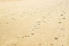 Kopyta i stopy druki w piasku obrazy royalty free
