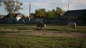 Kor i byn lager videofilmer