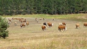 Kor i sätta in royaltyfri fotografi