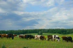 Kor i sätta in Royaltyfria Bilder