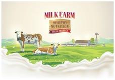 Kor i sommarlandskap och färgstänk mjölkar arkivbilder