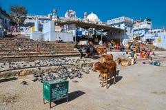 Kor och duvor i Rajasthan Arkivbilder
