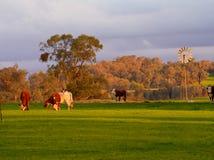 Kor och en väderkvarn Royaltyfri Bild