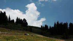 Kor och moln stock video