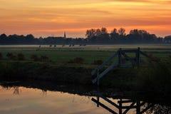 Kor som betar i den holländska bygden som soluppsättningarna på en dimmig höstafton arkivbild