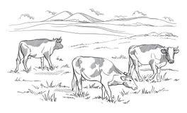Kor som betar på äng illustratören för illustrationen för handen för borstekol gör teckningen tecknade som look pastell till trad royaltyfri illustrationer