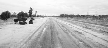 Kor vid den sandiga vägen i Mocambique Arkivfoto