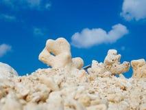 koraal royalty-vrije stock fotografie