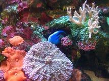 koraal royalty-vrije stock foto's
