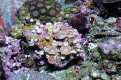 koraal stock afbeeldingen