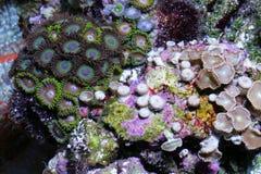 koraal stock fotografie