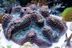 koraal royalty-vrije stock afbeeldingen