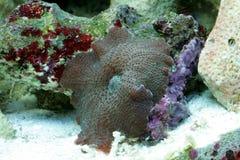 koraal stock foto