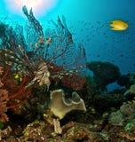 Koraal en schorpioenvissen Royalty-vrije Stock Foto