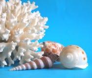 Koraal en shells Stock Foto's