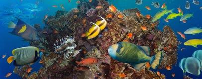 Koraal en vissen Stock Foto's