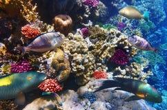 Koraal en vissen in het Rode Overzees. Egypte, Afrika. Royalty-vrije Stock Foto