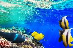 Koraal en vissen in het Rode Overzees. Egypte, Afrika. Stock Foto's