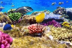 Koraal en vissen in Rode Sea.Egypt stock afbeelding