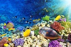 Koraal en vissen in Rode Sea.Egypt stock foto